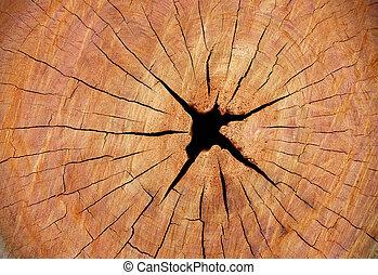 erdő, elvág, fa, struktúra, törzs