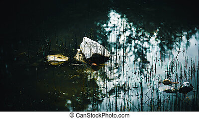 erdő, felszín, víz, mocsár, nő, csiszol, fű, dampness., tőzeg, híg, taiga., félhomály, lie., sötét