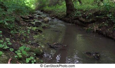 erdő, folyik, mohás, futás, rocks., felett