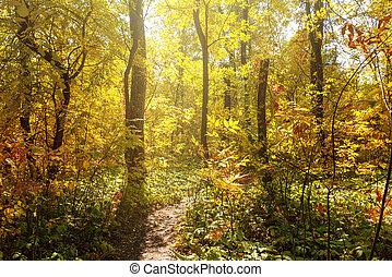 erdő, gyönyörű, ősz