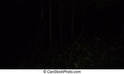 erdő, gyalogló, hosszúság, éjszaka