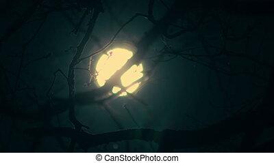 erdő, holdfény, kék, lámpa, éjszaka, hold, elágazik, fa