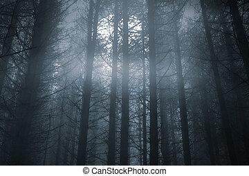 erdő, holdtölte, ködös, éjszaka