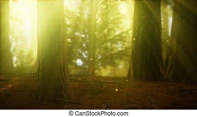 erdő, ködös, köd, szentjánosbogár