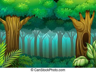 erdő, mély