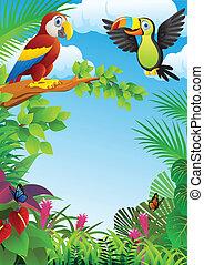erdő, madarak
