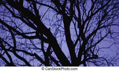 erdő, night., szürkület