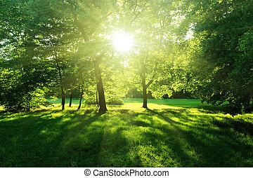 erdő, nyár, bitófák