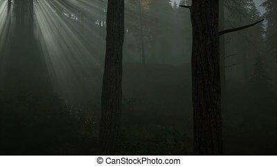erdő, reggel, köd, ősz