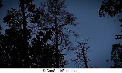 erdő, shots, hátborzongató, éjszaka