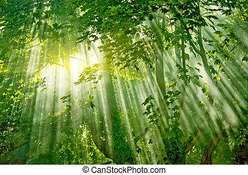 erdő, sunlights, varázslatos