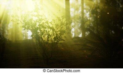 erdő, szentjánosbogár, köd, ködös