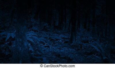 erdőség, mozgató, át, éjszaka
