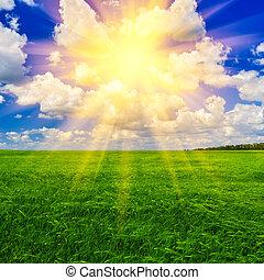 eredet, búza, nap, mező