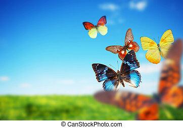 eredet, buttefly, színes, mező