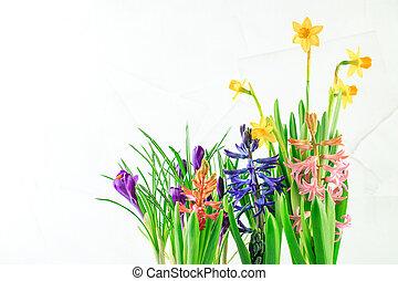 eredet, edény virág