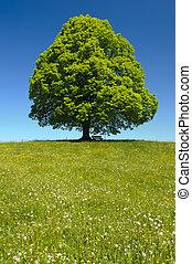 eredet, egyedülálló, fa