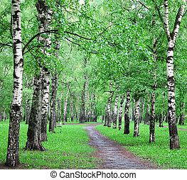 eredet, erdő, eső, nyírfa