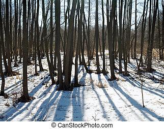 eredet, erdő, hó