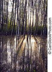 eredet, erdő, napvilág, reggel