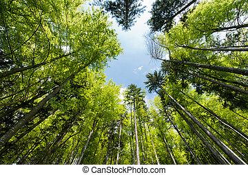 eredet, erdő, színes