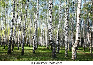 eredet, este, erdő