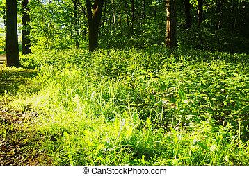 eredet, fényes, erdő, napvilág