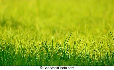 eredet, fű, zöld, napvilág, friss