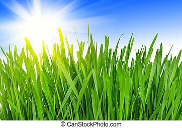 eredet, fű, zöld