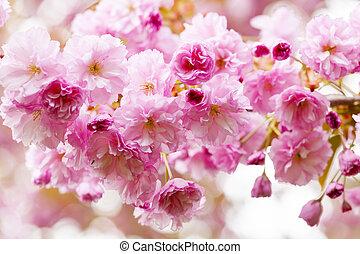 eredet, fa, kivirul, cseresznye