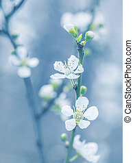 eredet, fa, virágzó
