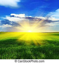 eredet, felett, kaszáló, napkelte