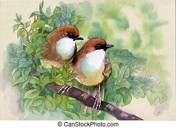 eredet, festmény, madarak, gyűjtés