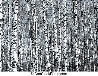 eredet, napvilág, alsónadrág, fehér, fekete, birch fa