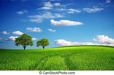 eredet, zöld terep