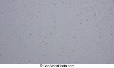 esés, hó