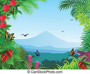 esőerdő, háttér
