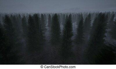 esőerdő, táj, köd, éjszaka