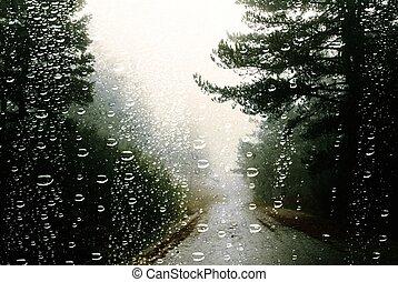 esős, autó, sóvárog, ősz erdő, ablak, esőcseppek, nap