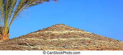 esernyő, pálma tengerpart, fa