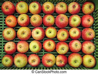 evez, állhatatos, alma