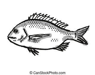 ezüst, ausztrál, rajz, retro, fish, aranyosfejű hal, karikatúra