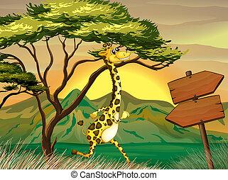 fából való, következő, zsiráf, idegenvezető, nyíl