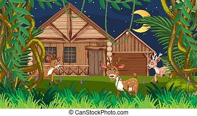 fából való, színhely, épület, éjszaka, erdő