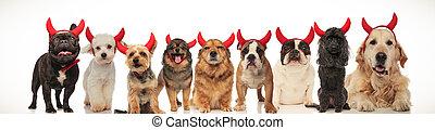 fárasztó, ördög, csoport, nagy, csápok, kutyák
