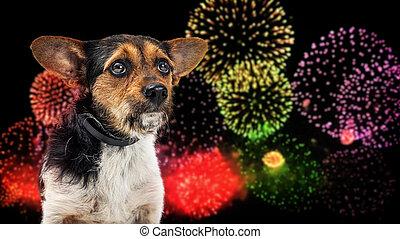 fél, nap, kutya, szabadság, tűzijáték