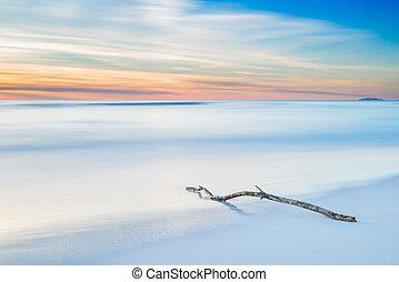 félhomály, erdő, napnyugta, elágazik, white tengerpart