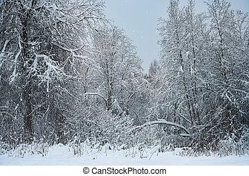 félhomály, erdő, tél