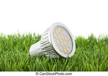 fény, fű, irányított, zöld, gumó