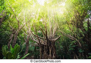 fény, meleg, fa erdő
